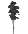 Zwarte rozen boeket 6 stuks