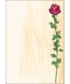 Kado tekst papier roos A4