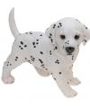 Dalmatier puppy beeldje staand 29 cm