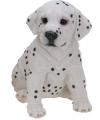 Dalmatier puppy beeldje zittend 23 cm