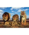 Fotografische poster wilde katten dieren