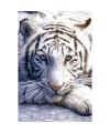 Fotografische poster witte tijger