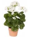 Namaak witte Geranium plant 35 cm